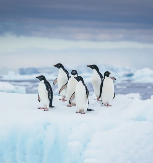 Antarctica_Georgia_de_Sud